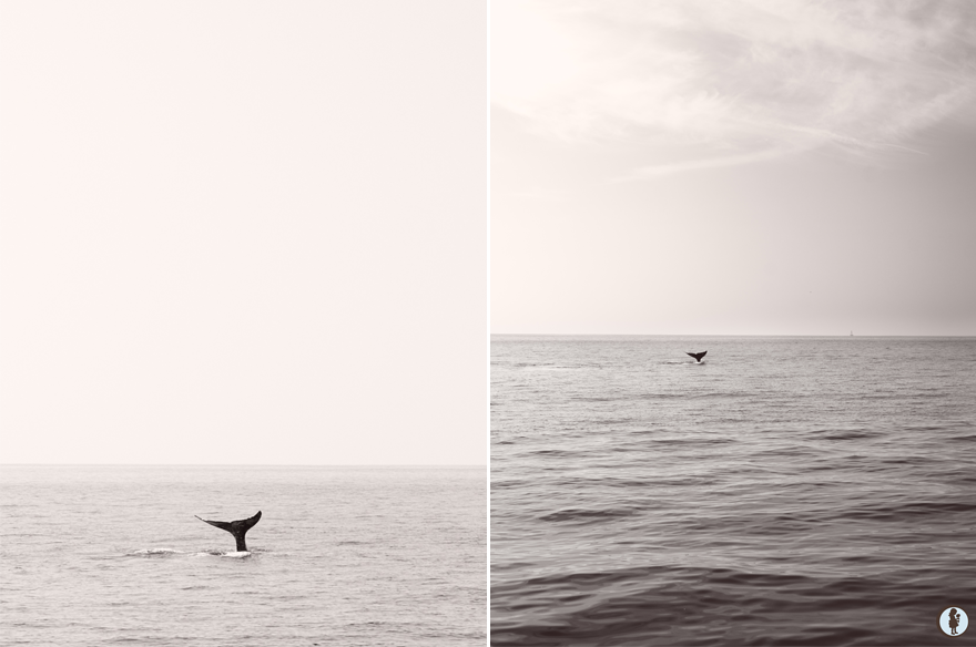 BWwhales